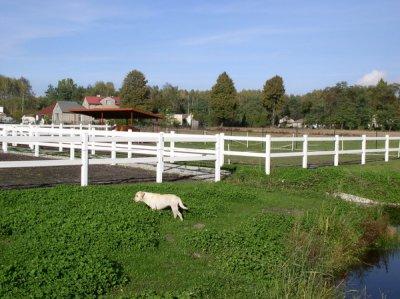 Ogrodzenia farmerskie PCV jakie korzyści.